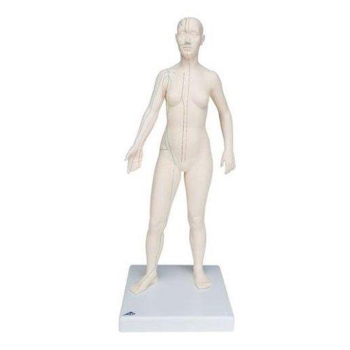 Model člověka s akupunkturními body - ženská figurína