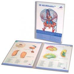 Brožura s popisem nervů v lidském mozku
