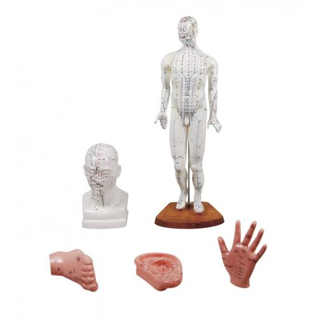 Sada 5 modelů pro akupunkturu