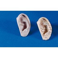 Sada 2 modelů ucha pro akupunkturu
