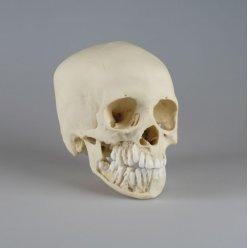 Model lebky dvanáctiletého dítěte