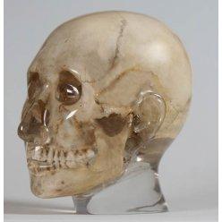 Model lidské hlavy pro RTG vyšetření, průhledný