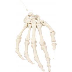 Kostra lidské ruky spojená nylonem