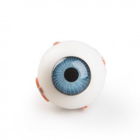 Náhradní díl - lidské oko