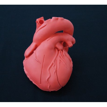 Model lidského srdce - elastický, didaktická verze