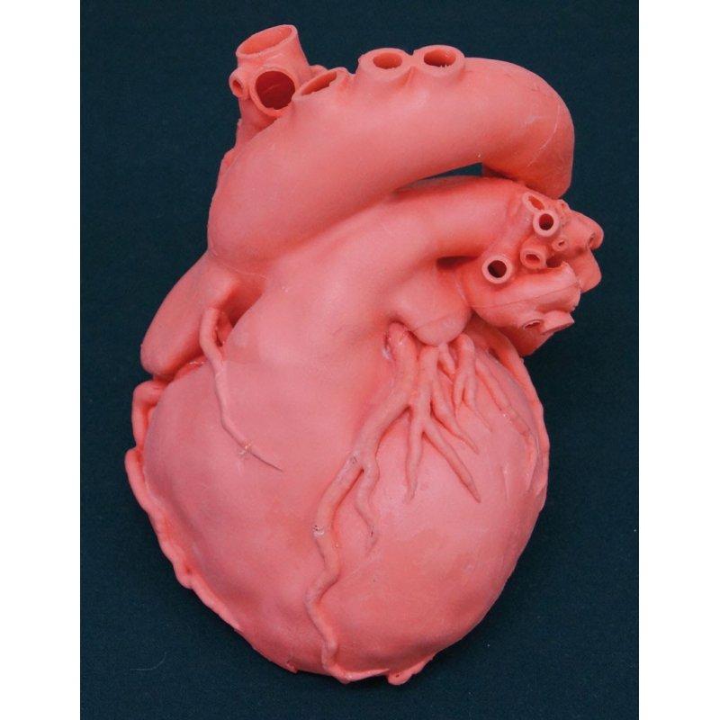 Model lidského srdce - profesionální