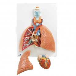 Model plic s hrtanem - 5 částí