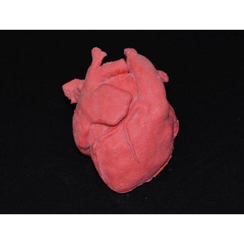 Model dětského srdce s transpozicí velkých tepen a defektem komorového septa