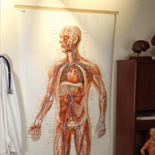 Schéma - cévní systém - čelní pohled - papír - 84 x 200 cm - DOPRODEJ