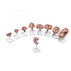 Luxusní série modelů těhotenství - 9 modelů