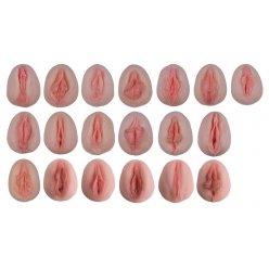 Vulva - odlitky zobrazující anatomické rozdíly