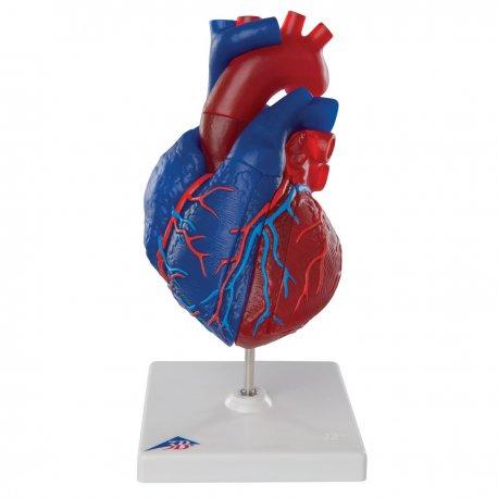 Magnetický model srdce - 5 částí