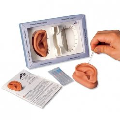 Lidské ucho s akupunkturními body - 2 ks
