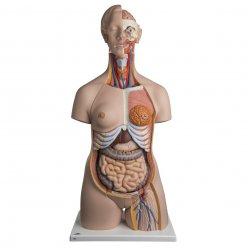 Torzo lidského těla - luxusní a oboupohlavní - 24 částí