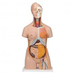 Torzo lidského těla - luxusní, oboupohlavní - 20 částí