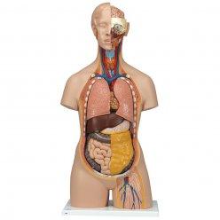 Torzo lidského těla - klasické s otevřeným krkem a zády - 18 částí