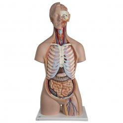 Torzo lidského těla - klasické s otevřeným krkem a zády - unisex - 21 částí