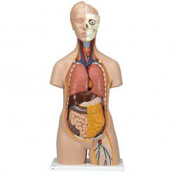 Torzo lidského těla - klasické - 12 částí