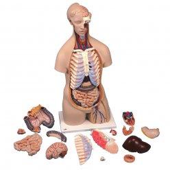 Torzo lidského těla - klasické - 16 částí