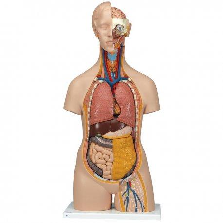 Torzo lidského těla - klasické s hlavou - unisex - 14 částí