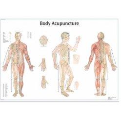 Schéma - akupunkturní body - AJ - 68x98 cm