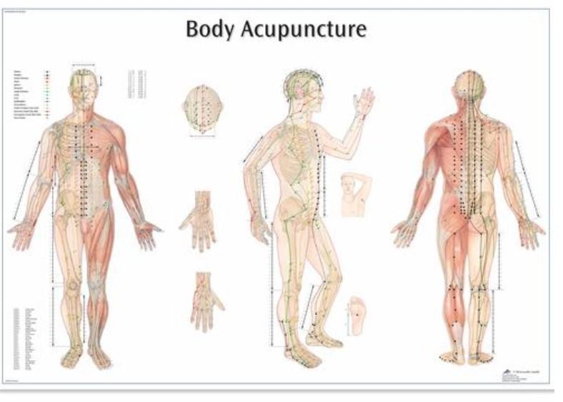 Schema Akupunkturni Body 68x98 Cm Anatomicke Plakaty