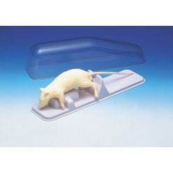 Model laboratorního potkana