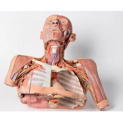 Hlava, krk a ramena s angiosomy