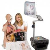 Torzo lidského těla - sada promítacích fólií do třídy - Doprodej
