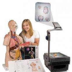 Torzo lidského těla - sada promítacích fólií do třídy