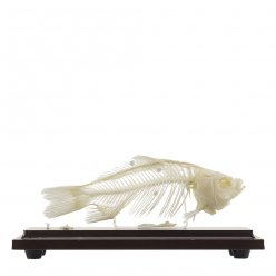 Kostra ryby