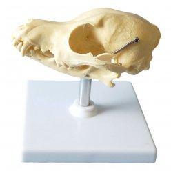 Detailní psí lebka