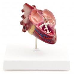 Psí srdce s parazitem