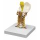 Krční páteř se svaly krku zepředu