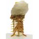 Krční páteř se svaly krku zezadu