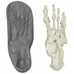 Lidská magnetická noha - složená