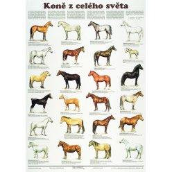 Schéma - Koně z celého světa