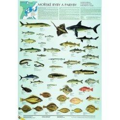 Schéma - Mořské ryby a paryby