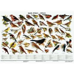 Schéma - Naši ptáci - pěvci