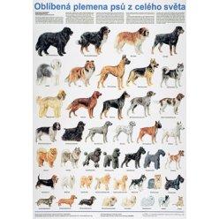 Schéma - Oblíbená plemena psů z celého světa