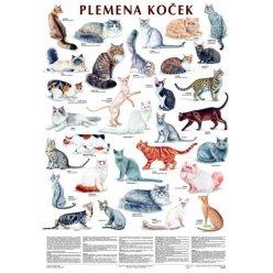 Schéma - Plemena koček