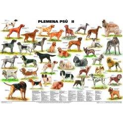 Schéma - Plemena psů II