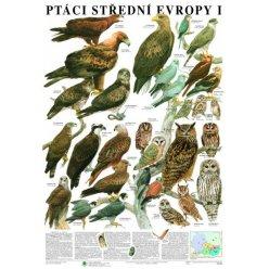 Schéma - Ptáci střední Evropy I