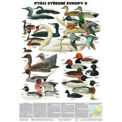Schéma - Ptáci střední Evropy II
