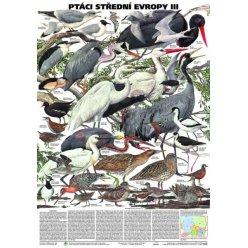 Schéma - Ptáci střední Evropy III
