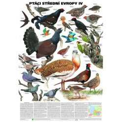 Schéma - Ptáci střední Evropy IV