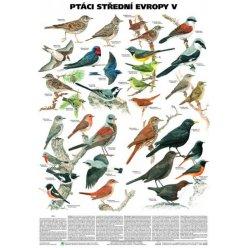 Schéma - Ptáci střední Evropy V (Pěvci 1)