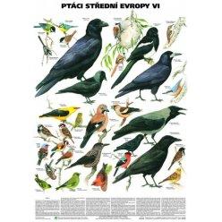Schéma - Ptáci střední Evropy VI (Pěvci 2)