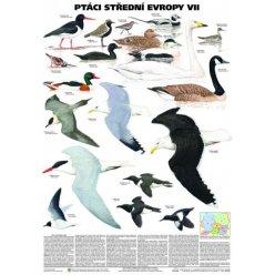 Schéma - Ptáci střední Evropy VII
