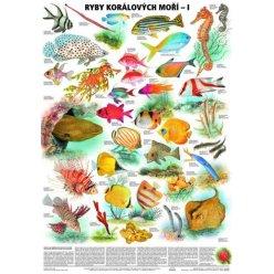 Schéma - Ryby korálových moří - I